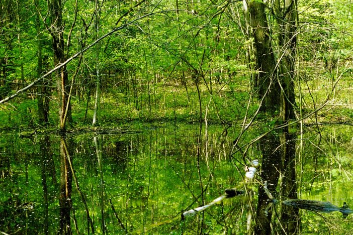 Vernal Pool (Atomic Geograhy) Vernal Pool From the Early Cyborocene